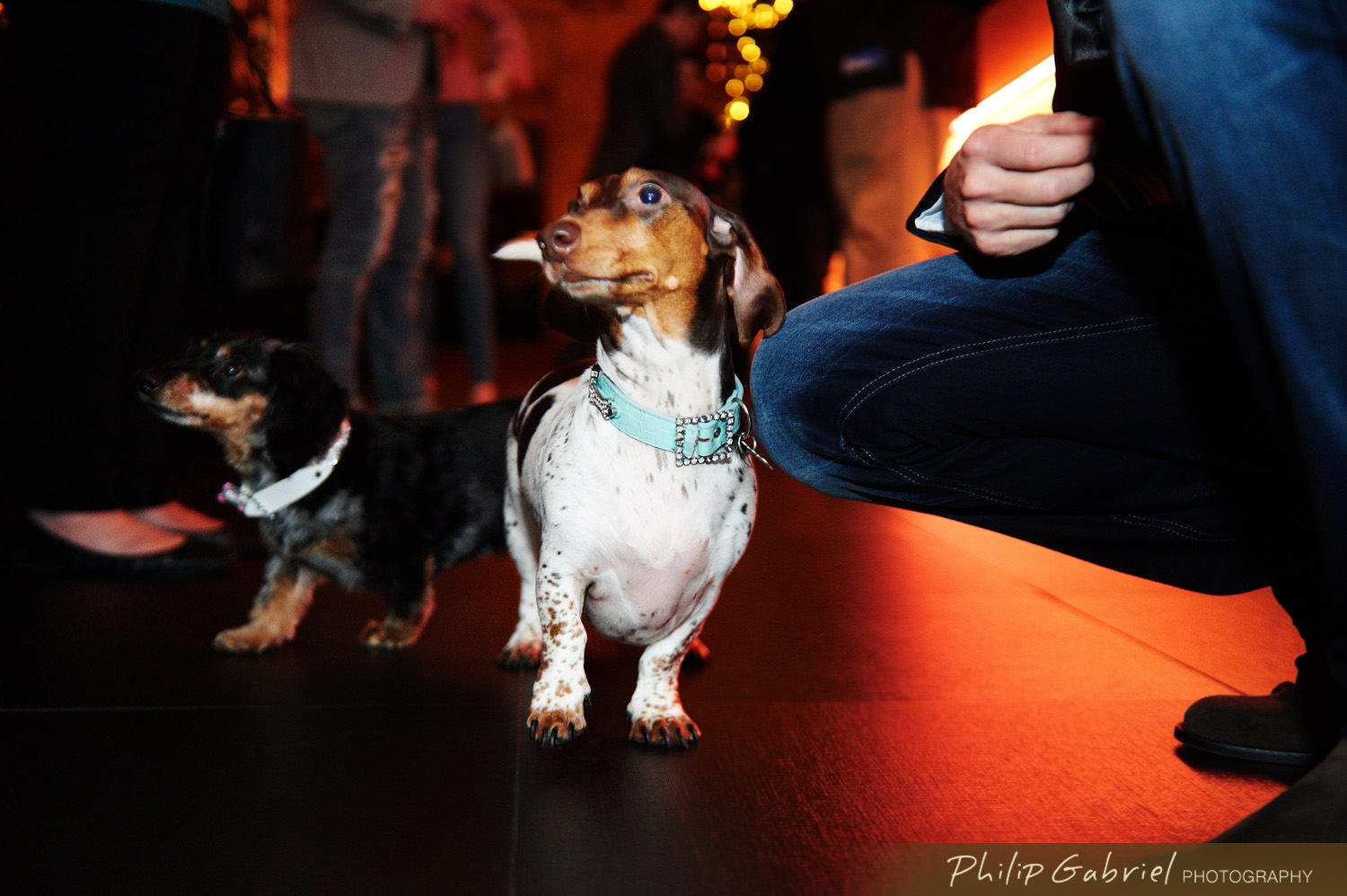 Contact Philip Gabriel Photography Today For More Information On Our Event Pet Packages