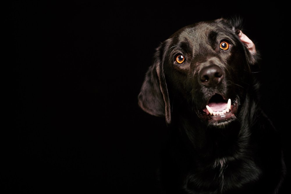 Pet Photography by Philip Gabriel Photography
