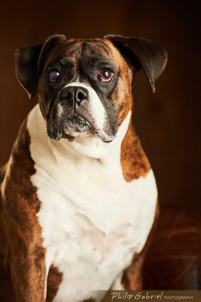 Philadelphia Pet Photography